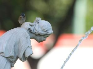 Tico Tico - Livro Pássaros da Liberdade