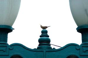 Pássaros na Praça - Livro Pássaros da Liberdade